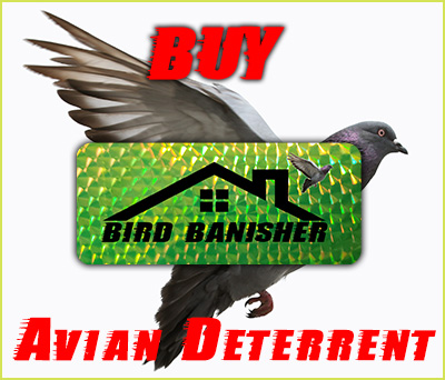 Buy the Bird Banisher, the best bird control and woodpecker scare device image.