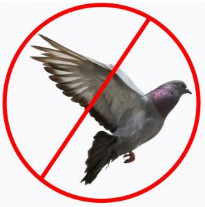 Repel Birds away from your property